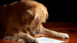 Dog reading letter wallpaper 928