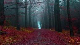 red forest pathway Wallpaper Background | 38745 1879
