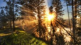 Sun rays through tree branches wallpaper #8254 153