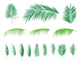 Palm Leaves Silhouettes Set 1223