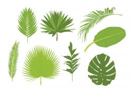 Palm Leaves VectorsDownload Free Vector Art, Stock Graphics 1844