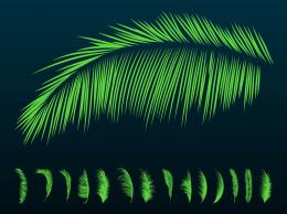 Palm Leaf Palm leaves silhouettes 1240
