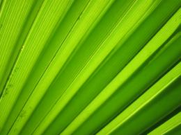 Palm Leaf Detail Free Stock Photo HDPublic Domain Pictures 396