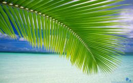 beach palm leaf 1920x1200 1767