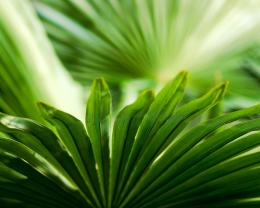 Palm Leaves Macro Hd Wallpaper | Wallpaper List 1683