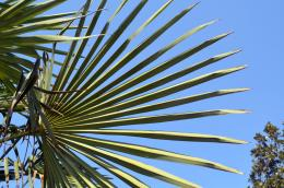 Palm Leaves Free Stock Photo HDPublic Domain Pictures 840