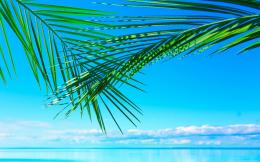 Ocean Palm Leaves Wallpapers Pictures Photos Images 668