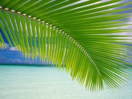 Palm leaf on beach wallpaper 1473