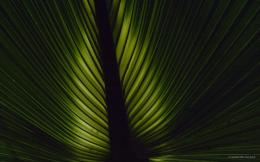 Palm Tree Leaf With Sky In Back Facebook Cover Image Pictures 1092