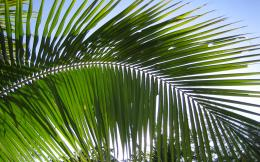 Palm Leaves by Michel8170 on DeviantArt 1861