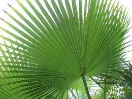 AS YOU LEARN MORE, START MAKING A LIST OF THE SPECIES OF PALMS THAT 1668