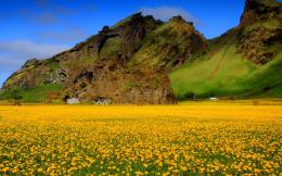 Yellow Flower Field Wallpaper 882