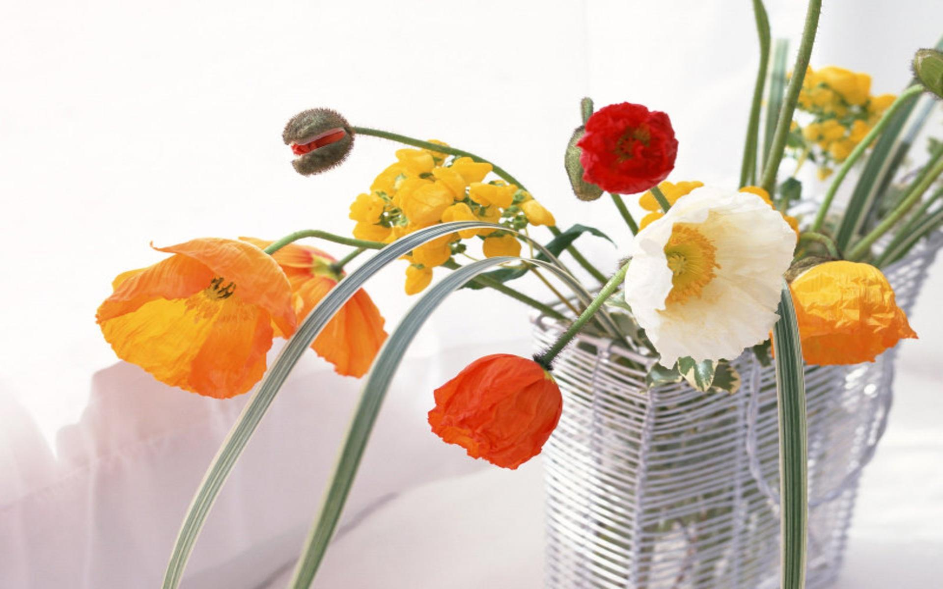 Download Poppies in vase High quality wallpaper 1309