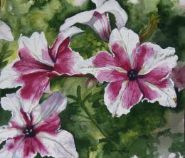 Colorful Life by Helen Shideler: Pretty Petunias 621