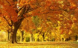 Yellow autumn scenery Wallpapers Pictures Photos Images 404
