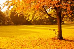 Yellow Autumn Free Stock Photo HDPublic Domain Pictures 830