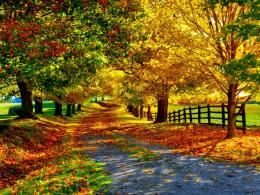 Fall Wallpapercynthia selahbluecynti19Wallpaper35525310 1886