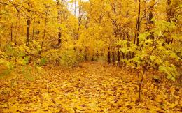 Nature Autumn Yellow Forest Leaves Field Fallen | Okay Wallpaper 560