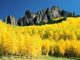 BEAUTIFUL AUTUMN FOLIAGE IMAGESYELLOW MOUNTAINS! 1202