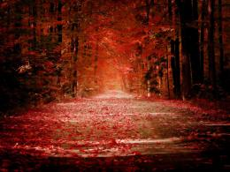 Falling Red Leaves Trees HD Wallpaper 1672