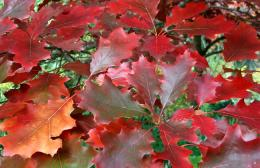 Autumn Leaf Pictures 367