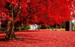 Autumn Tree HD Images 1199