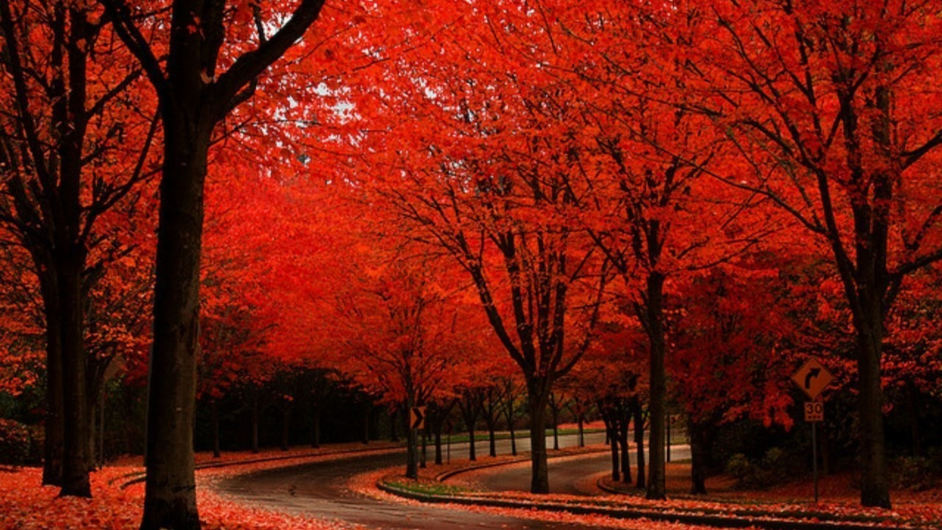 red fall wallpaper - photo #23