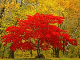 Autumn Trees 1065