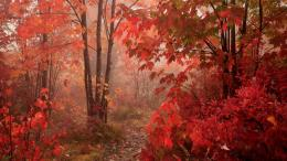 Fall red leaves forest autumn hd wallpapers epic desktop backgrounds 1512