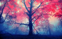 Red leaves tree Wallpapers Pictures Photos Images 739
