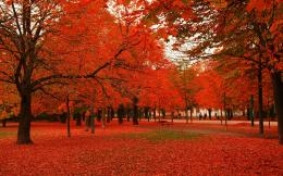 Download Red leaves autumn trees Wallpaper | Free Wallpapers 295