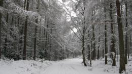 path through the snowy forest 1607