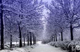 Snow covered forest path winter nature HD Wallpaper 650