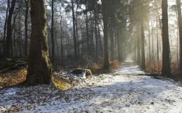 Snow covered forest pathsDownload free photos broad beautiful 614