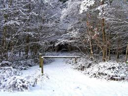 File:A snow covered path at Hawkbatch, Wyre Forestgeograph org uk 682