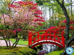 Spring Bridge Picture Free Download 1846