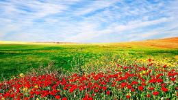 nature flowers sown field landscape sky wallpaper background 296