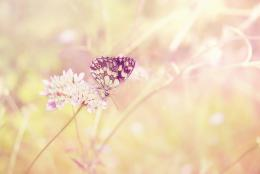 Butterfly, insect, flower, plant, field, light, sun, summer 1316846245 984