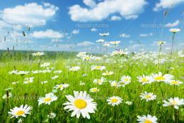 Field of summer flowers — Stock Photo © Iakov #6269957 259