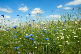 Summer flowers field — Stock Photo © cobalt88 #3449019 916