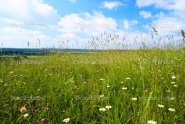 Field of summer flowers — Stock Photo © Iakov #4607771 1334