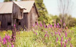 Nature Birds House Purple Flowers Field Summer Fence Moving Wallpaper 402