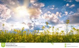 Summer Field With Flower Stock PhotographyImage: 23203242 433