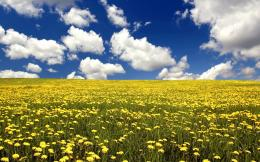 summer is coming, and this makes me happy» summer flower field and 707
