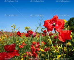Summer field with flowers — Stock Photo © cobalt88 #3774498 1292