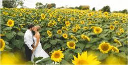 Sunflower Field Wedding Photos 630
