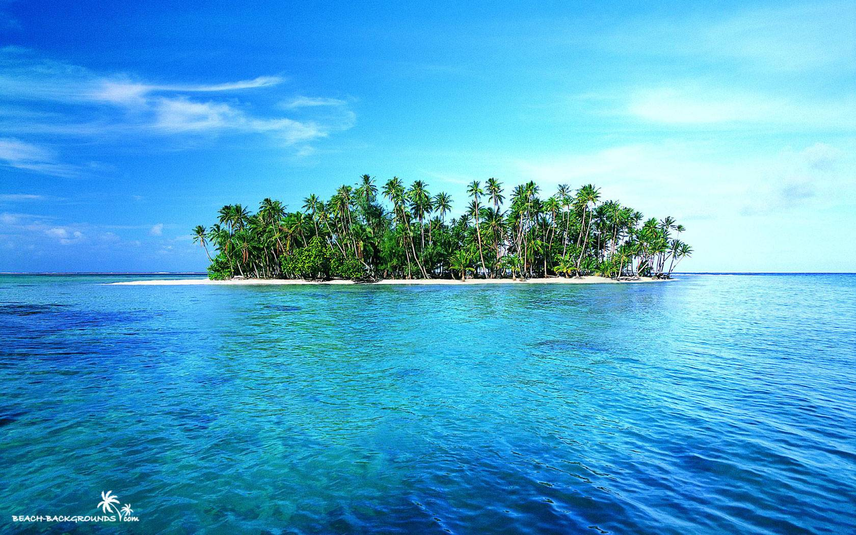 Island Green Tropic Palms White Lonely Backrounds Wallpapers 595