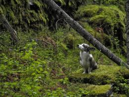 download lonely dog in the forest wallpaper in animals wallpapers with 1744