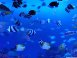 Underwater life wallpapers and imageswallpapers, pictures, photos 401