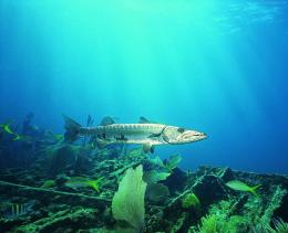 Life Underwater WallpapersPage 9 161
